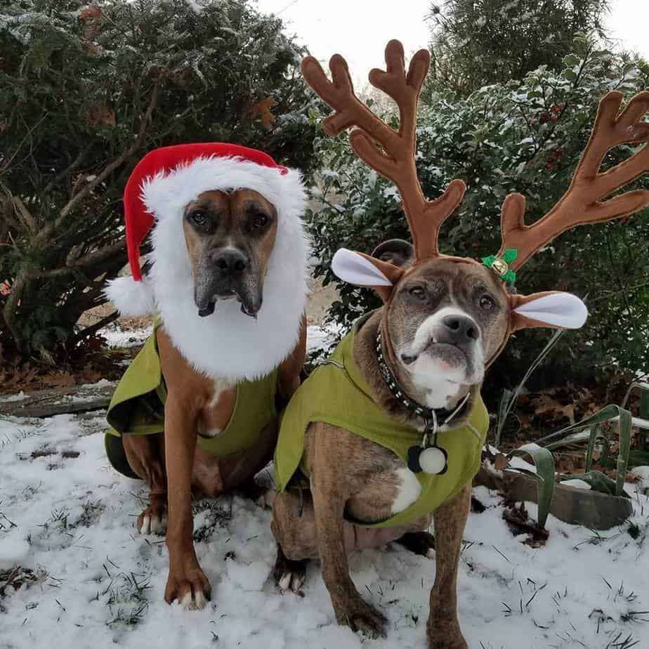 dogs with antlers