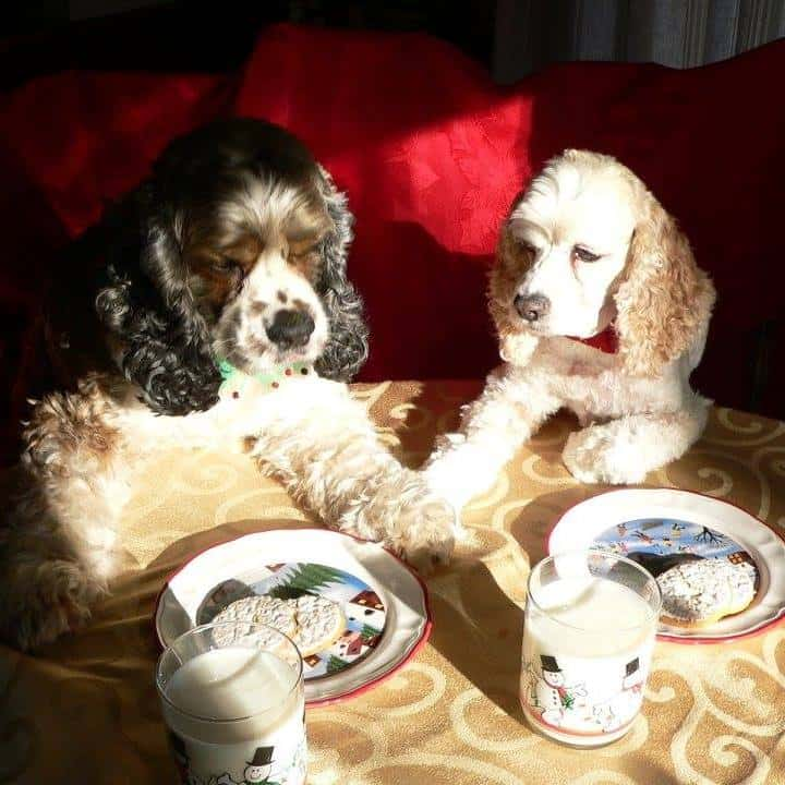 Dog Christmas winners