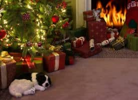 Last Minute Health Wellness Gifts for Dogs