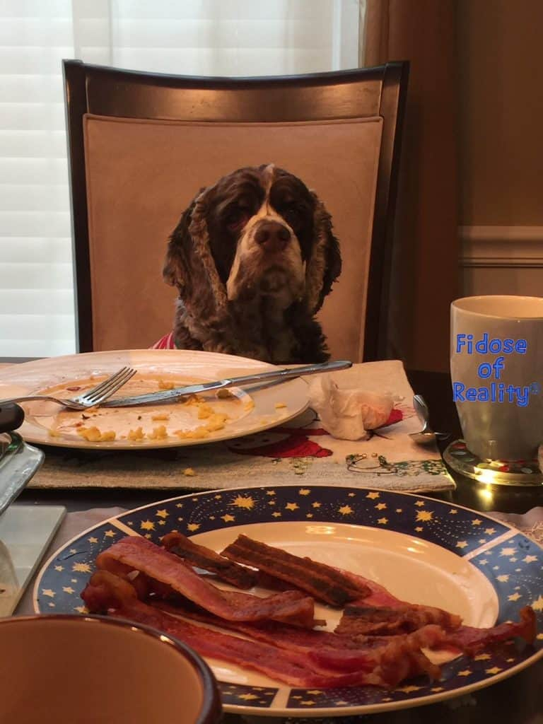 Dog at the table for breakfast
