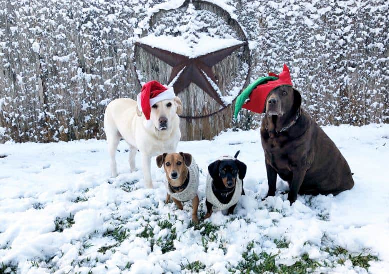 Christmas contest dog winners