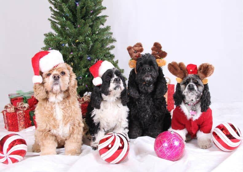Christmas Dog Photo Contest Winner