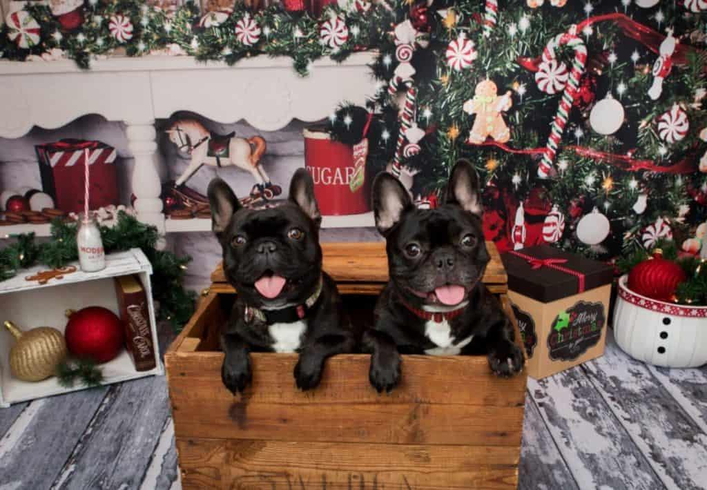 Dog winners christmas