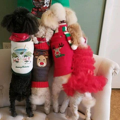 Cute Christmas dogs