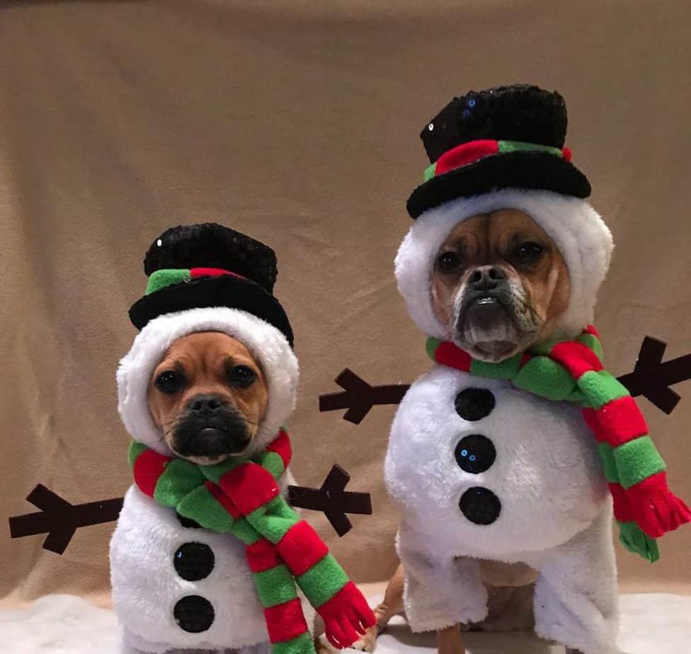 Dog snowmen