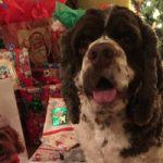 Dex the Halls Dog Photo Contest Winners 2017