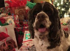 Dex the Halls Dog Photo Contest Winners 2017