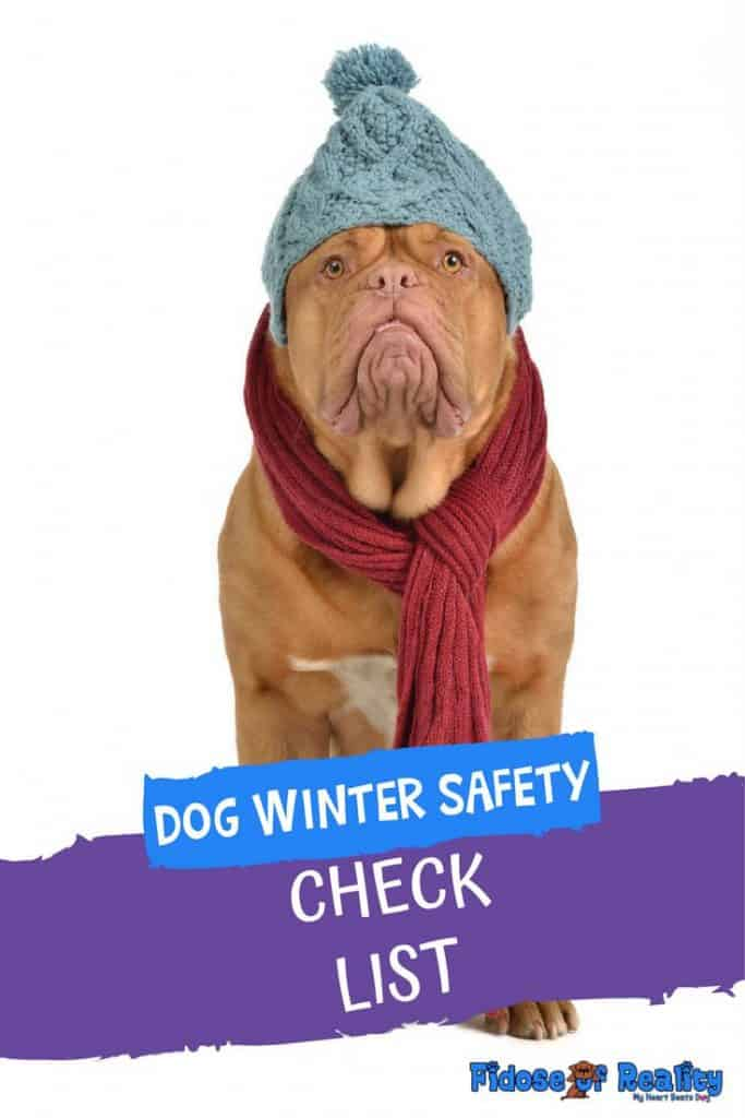 DOG WINTER SAFETY CHECKLIST