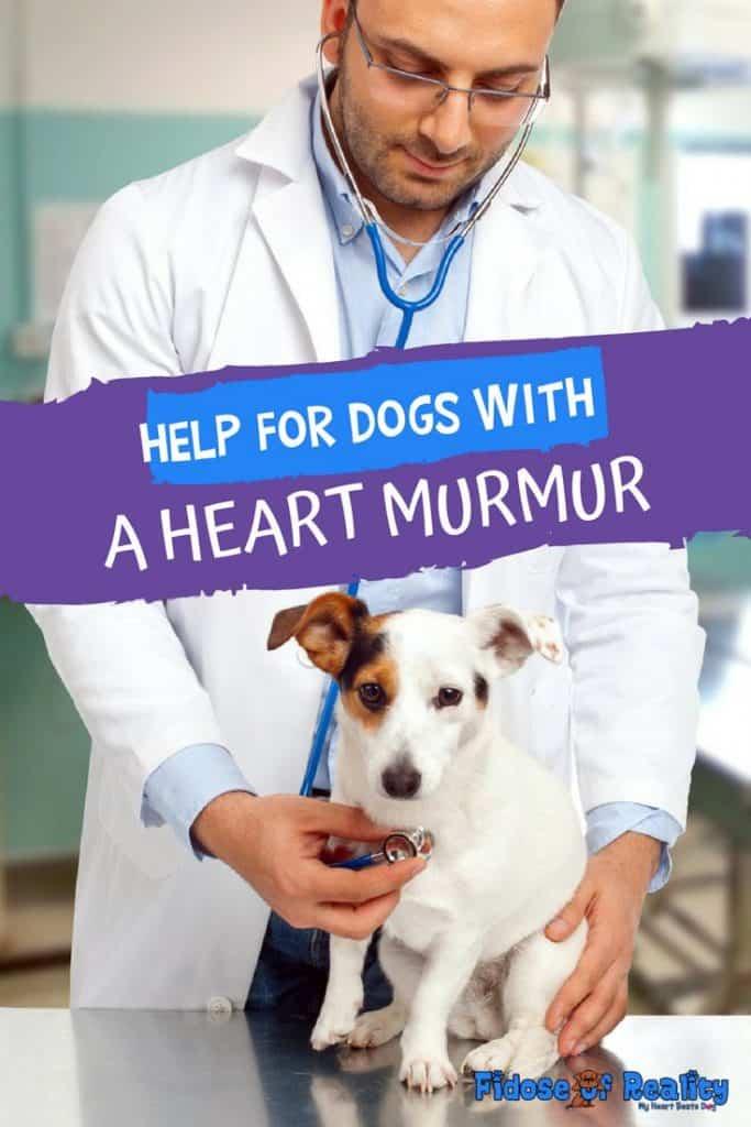 dog heart murmur help