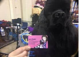 Cocker Spaniel Sets Records + Giveaway #BHDOGSHOW