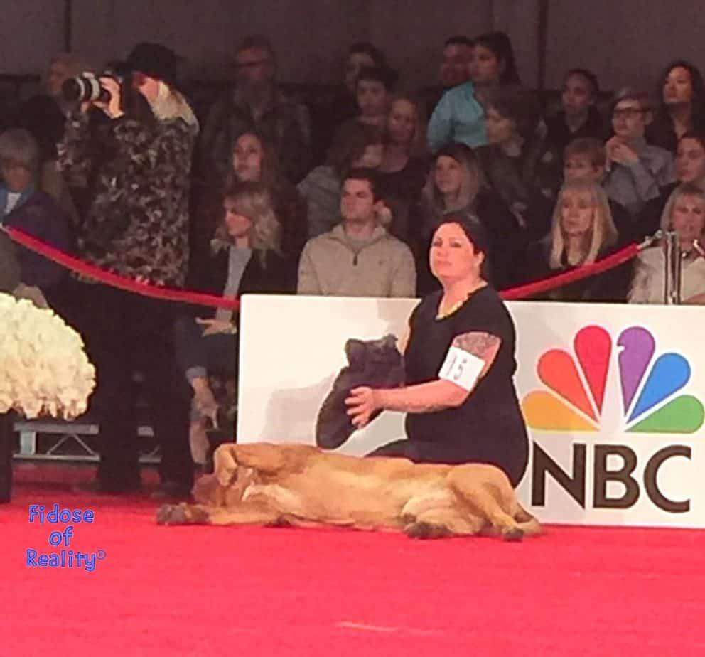 Dog at Beverly Hills Dog Show