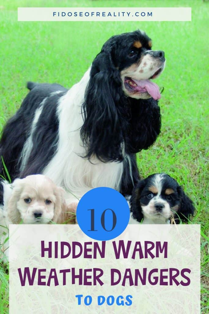 Warm weather dog dangers