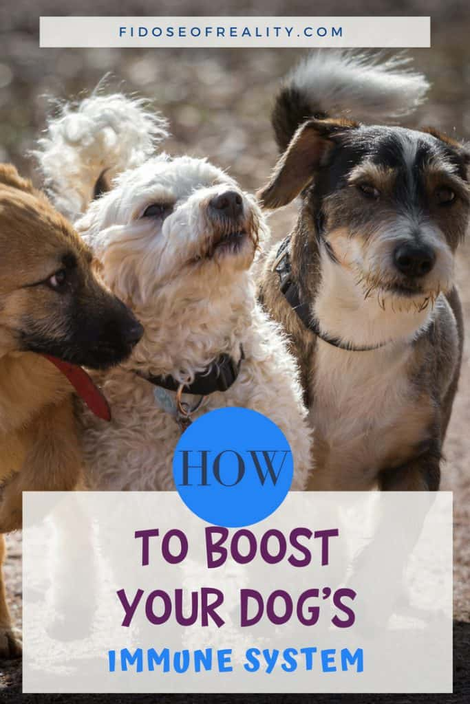 How to boost dog immune system
