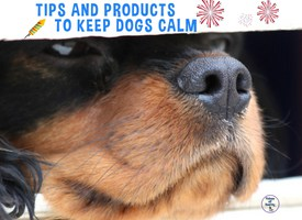 Timely Tips and Products To Keep Dogs Calm