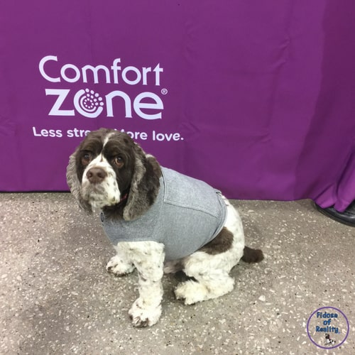 Calming vest for dogs
