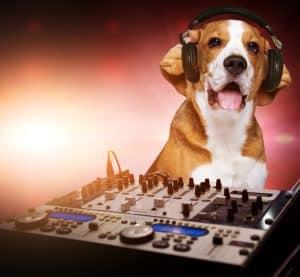 listen dog