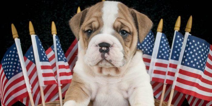 Keep dogs safe during fireworks