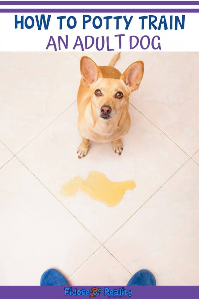 How to potty train adult dog