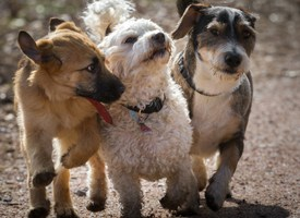 How I Strengthen My Dog's Immune System and So Can You