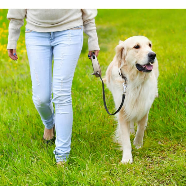 dog walking limping front leg