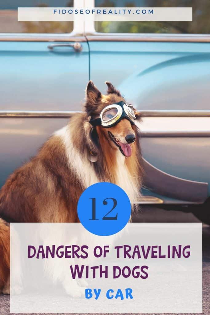 Dog car travel dangers