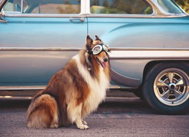 Top 12 Dangers of Traveling With Dogs By Car