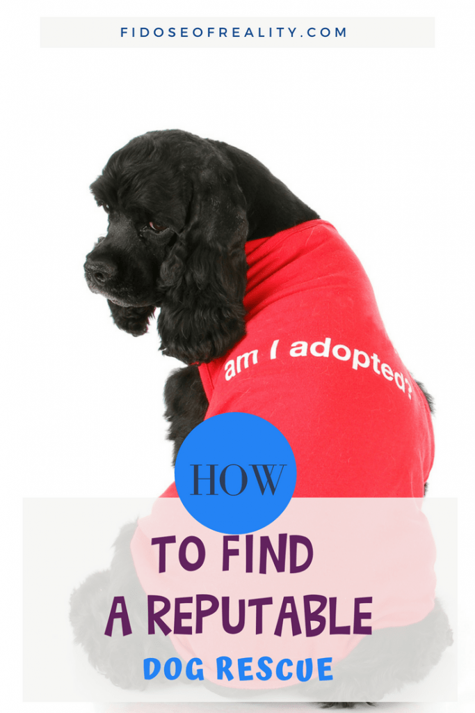 How to find a reputable dog rescue