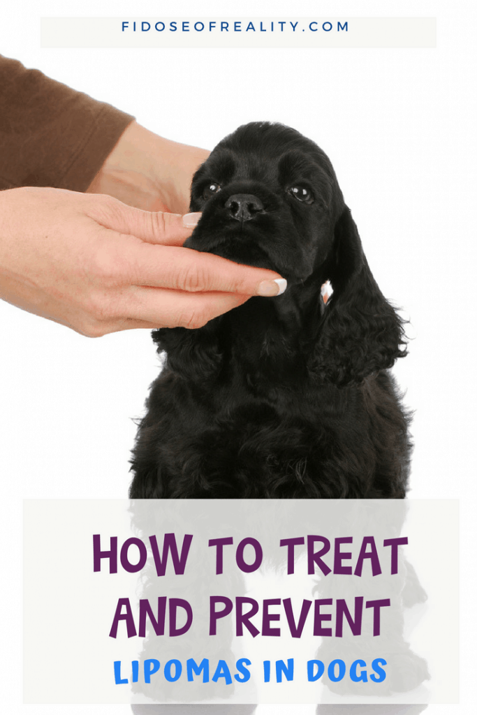 How to prevent and treat dog lipomas