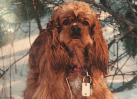 My Deceased Dog Connected With Me In The Twilight Zone