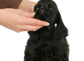 How To Treat And Prevent Lipomas in Dogs
