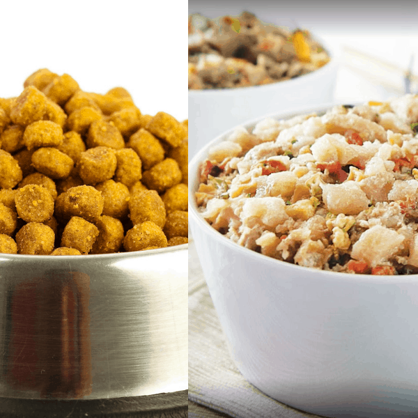 Which dog food is best for my dog