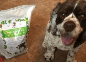 What Dog Food Is Best For My Dog?