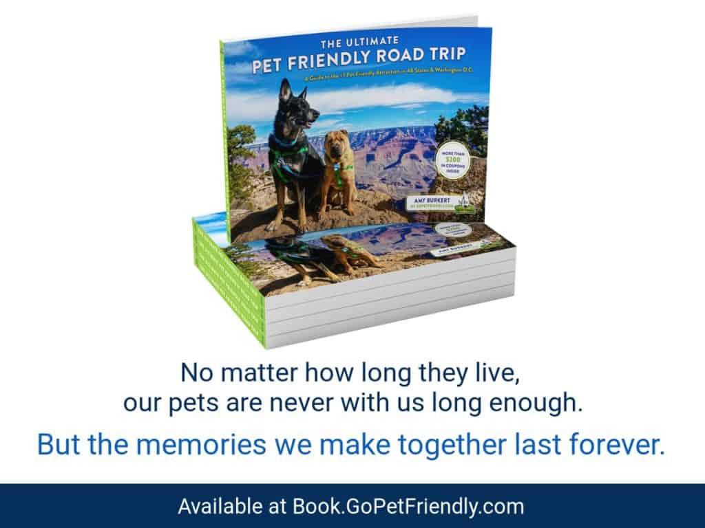 Pet friendly road trip