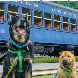 Pet Friendly Lehigh Gorge Railway And Giveaway