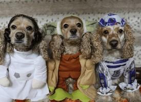 Dog Halloween Photo Contest Winners 2018