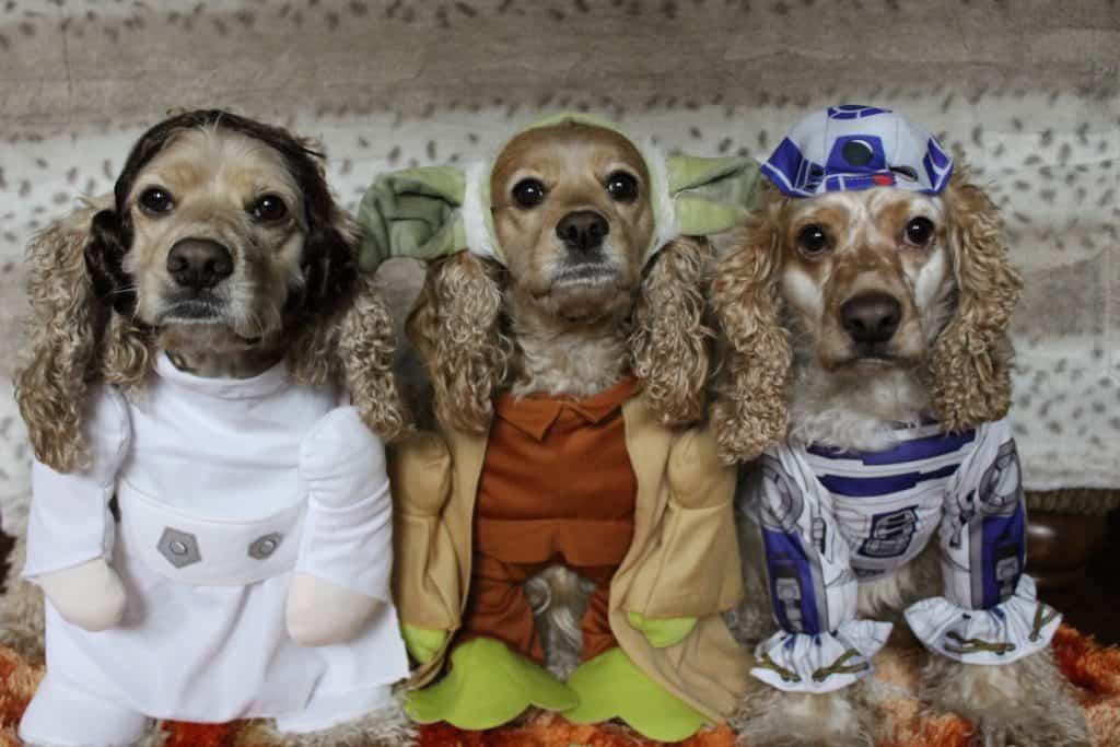 Dog Halloween contest