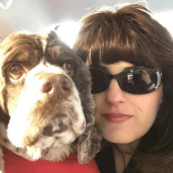 dog friendly road trip