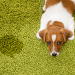 Safer Ways to Remove Dog Stains and Odors