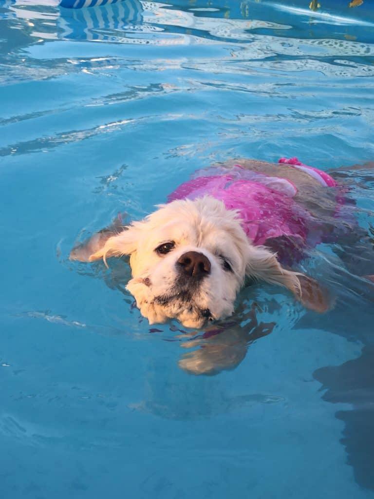 Coco swimming