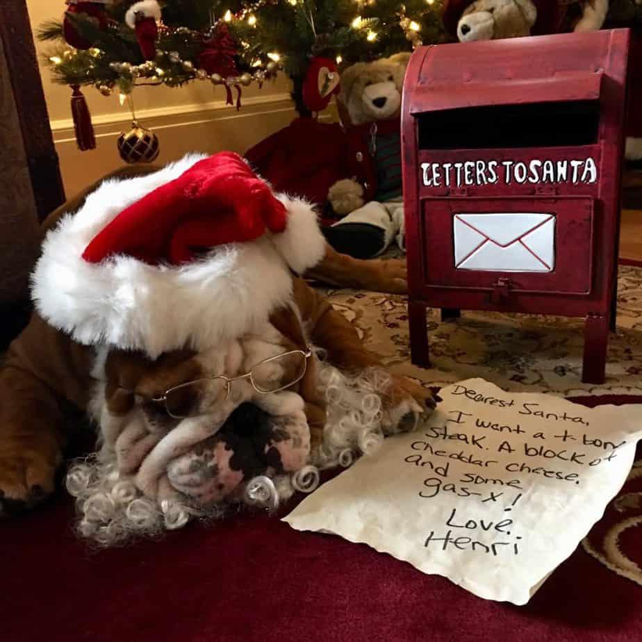 Santa dog in photo contest