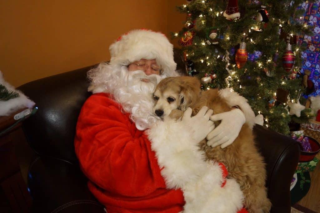 Dog with Santa Claus