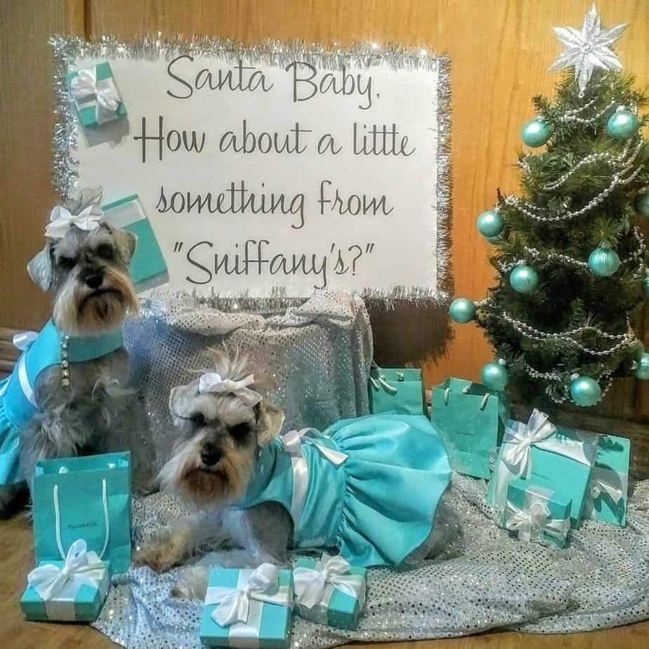 Dog photo contest Christmas