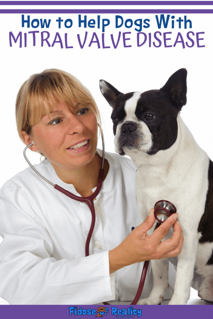 dogs with mitral valve disease