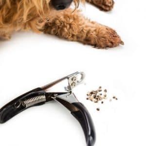 Dog having his nails clipped
