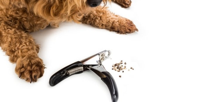 How To Cut A Dog's Nails Without Harming The Dog