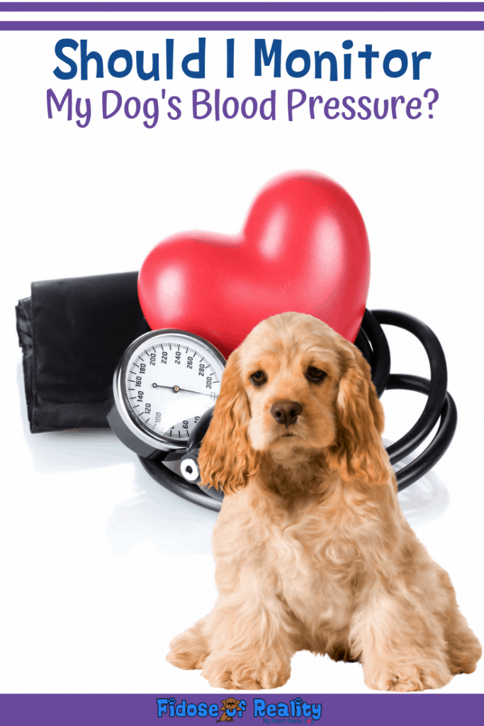how to monitor dog blood pressure