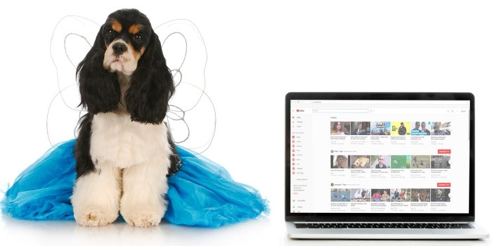 84 Best Cocker Spaniel Gifts Online Edition