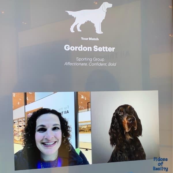 dog museum fun