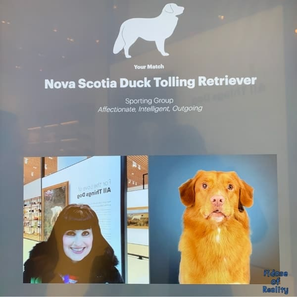 dog museum pictures