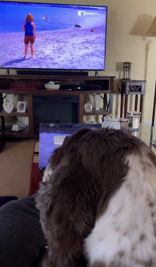 dog watching dogtv
